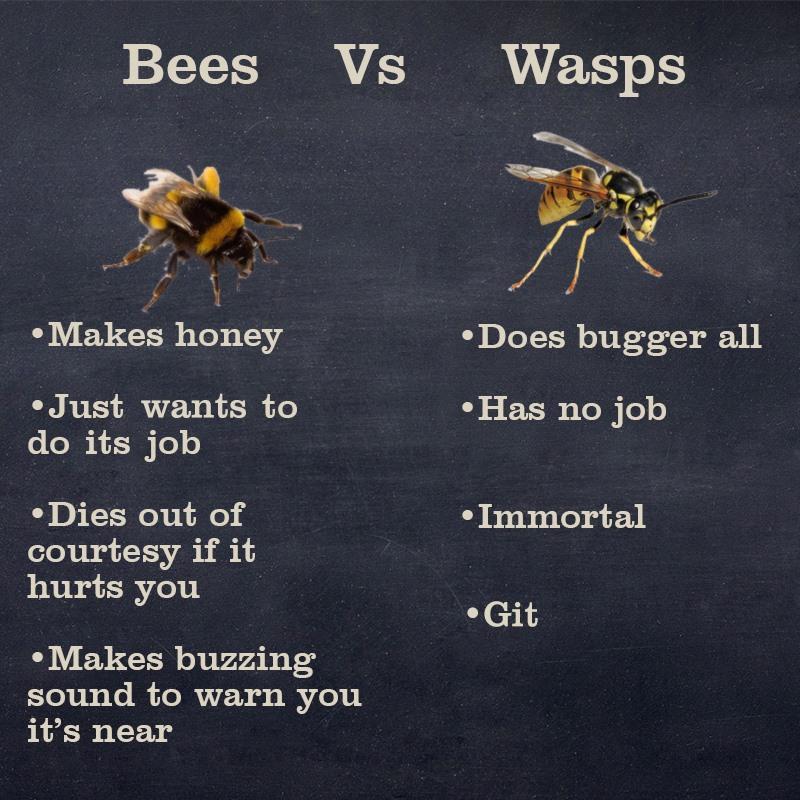 Bees v Wasps